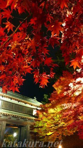 紅葉,2016年,弘前城,弘前,ライトアップ