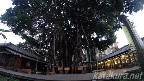 台中文学館,臺中文學館,ガジュマル,榕樹,台中散策