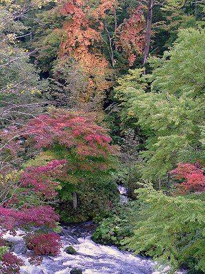 阿寒,滝見橋,紅葉