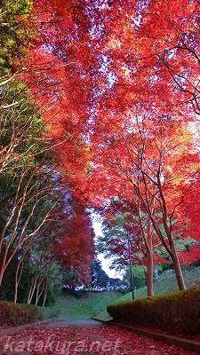紅葉,白井,白井聖地霊園