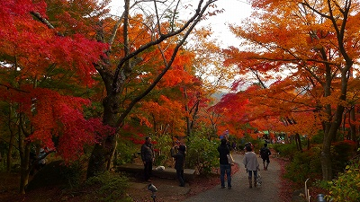 筑波山,紅葉
