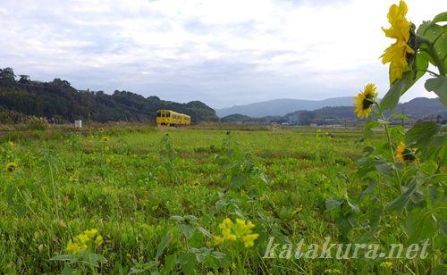喜入駅,菜の花,指宿枕崎線