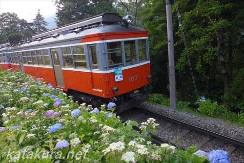 箱根登山鉄道,あじさい,大平台,紫陽花,吊りかけ