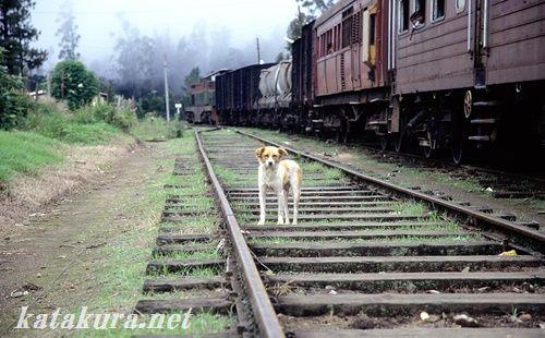 スリランカ,高原列車,キャンディ