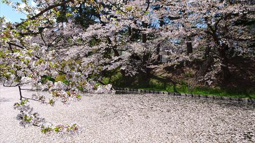 花筏,弘前城,櫻花,サクラ,弘前公園