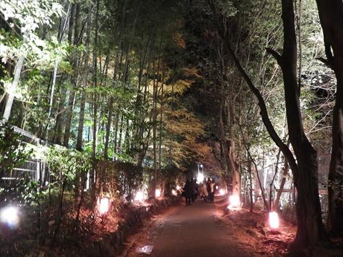 竹の小径,京都観光,嵐山,嵐電,京都散策,嵐山散策
