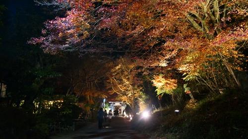 常寂光寺,竹の小径,嵐山散策,紅葉2019