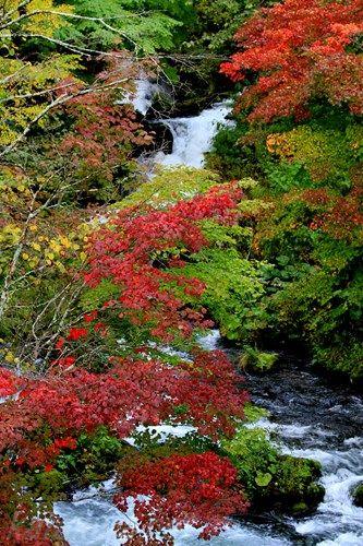 阿寒,滝見橋,紅葉,阿寒湖温泉,釧路,道東