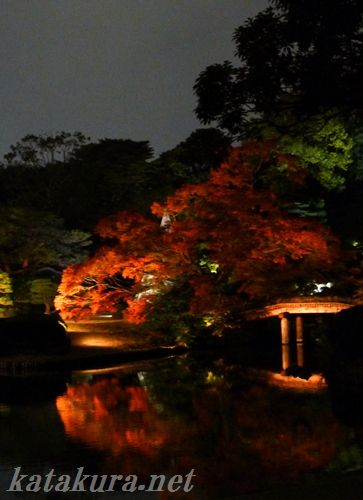 六義園,紅葉,日本