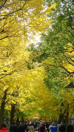 上野公園,銀杏