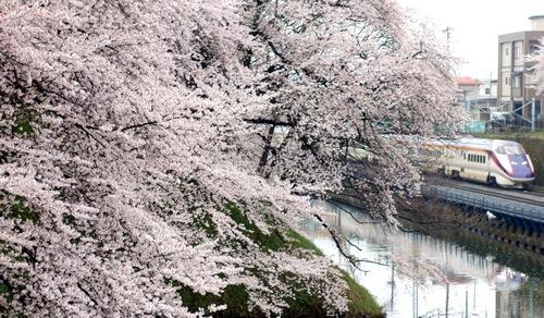 山形新幹線,霞城,櫻花,さくら