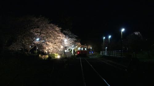 里見駅,小湊鉄道,夜桜