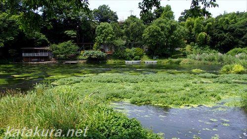 柿田川,富士山,清水町,湧水,名水,柿田川公園