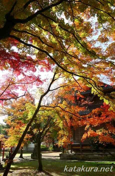 城上神社,石見銀山,大森町,紅葉