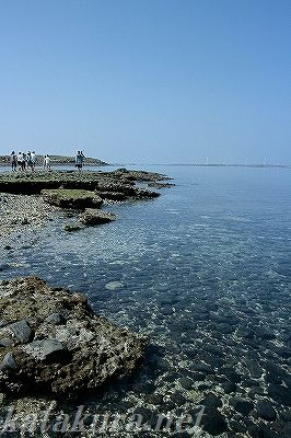 澎湖,員貝,東海