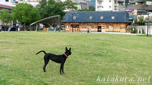 臺灣黒狗,台湾黒犬,台湾クロイヌ,新北投駅